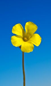 1136651_spring_flower